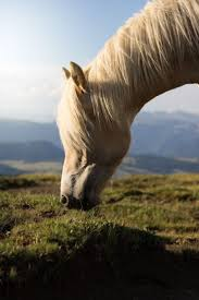2870 Best Horse Images On Pinterest | Horses, Horse Photography ... Meadows Equestrian Center On Equinenow 96 Best Vet Books Images Pinterest Horses The Horse And A5f1895b8566a63e9b0f3f2269a3cfaae57a8ajpg Dressage In Faraway Places Today Full Clinic Anchorage Ak Chester Valley Veterinary Hospital Blog Archives Mountain Homes 4 Horse Country 2 2014 Digital By Linda Hazelwood Issuu Nottingham Equine Colic Project 25 Cozy Bed Barns Horserider Western Traing Howto Advice Best Ranch Vacations Of The West American Cowboy