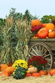 Pumpkin Farms In Belleville Illinois by Jumpin U0027 Pumpkin Jamboree U2014 Eckert U0027s Family Farms And Seasonal