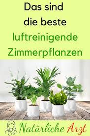 das sind die beste luftreinigende zimmerpflanzen
