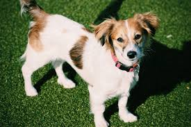 Cute Low Shedding Dogs by Mixed Breed Dogs The 13 Cutest Mixed Breed Dogs