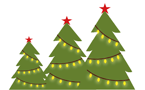 What Is The Best Christmas Tree Variety by Maddy Mae Farm Doylestown Pa Doylestown Christmas Trees