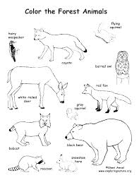 Wildlife Coloring Pages Printable Animal Desert Animals Rainforest