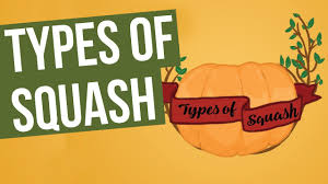 Types Of Pumpkins And Squash by Types Of Squash Youtube
