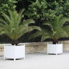 prix des palmiers exterieur tailler des palmiers techniques ooreka