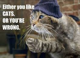 thug cat top 25 thug cat memes quotes and humor