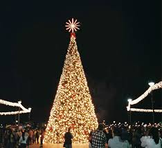 Bayfront Parks Christmas Tree