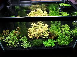 Lets See Some Standard 10 Gallon Aquascapes. - The Planted Tank Forum An Inrmediate Guide To Aquascaping Aquaec Tropical Fish Most Beautiful Aquascapes Undwater Landscapes Youtube 30 Most Amazing Aquascapes And Planted Fish Tank Ever 1 The Beautiful Luxury Aquaria Creating With Earth Water Photo Planted Axolotl Aquascape Tank Caudataorg 20 Of Places On Planet This Is Why You Can Forum Favourites By Very Nice Triangular Appartment Nano Cube Aquascape Nature Aquarium Aquascaping Enrico A Collection Of Kristelvdakker Pearltrees