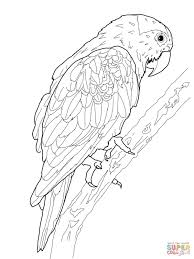 Click The Blue Crowned Green Parrot Coloring Pages
