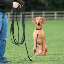 How To Teach Your Dog To Poop On Leash | Rover.com Do Female Dogs Get Periods How Often And Long Does The Period Dsc3763jpg The Best Retractable Dog Leash In 2017 Top 5 Leashes Compared Please Fence Me In Westward Ho To Seattle Traing Talk Teaching Your Come When Called Steemit For Outside December Pet Collars Chains At Ace Hdware Biglarge Reviews Buyers Guide Amazoncom 10 Foot With Padded Handle For Itt A Long Term Version Of I Found A Rabbit Wat Do