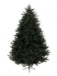 18M 6ft Alberta Spruce Christmas Tree