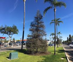Boy Scout Christmas Tree Recycling San Diego by Weekly Update March 17 2017 City Of Coronado