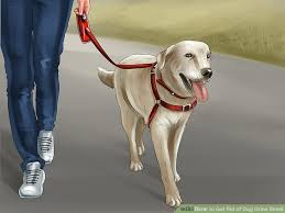 Dog Urine Odor Hardwood Floors by 4 Easy Ways To Get Rid Of Dog Urine Smell Wikihow