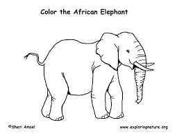 African Elephant Coloring Pages Animals