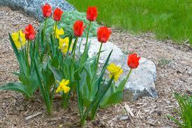 How to Mulch & Fertilize a Garden