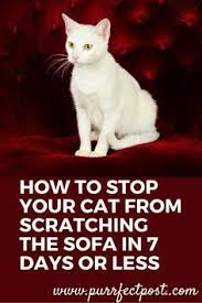 cat stop make your own all cat deterrent spray cat deterrent