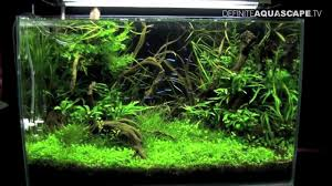Aquascaping - Nature Aquariums Of ZooBotanica 2013 - YouTube Aquascaping Nature Aquariums Of Zoobotanica 2013 Youtube Aquascape The Month November 2009 Riverbank Aquascaping Style Part 5 Roots By Papanikolas Nikos Awards Aquascapes Lab Tutorial River Bottom Natural Aquarium Plants The Planted Tank 40 Gallon Aquarium Everything About Incredible Undwater Art Cube Tanks Aquariums Dutch Vs How To A Low Tech Part 1