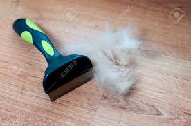 Dog Hair Shedding Blade by A Pile Of Dog Hair With A Slicker Brush Stock Photo Picture And