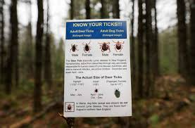 Ticks On Christmas Trees 2015 by Tick Borne Anaplasmosis On The Rise In Capital Region Times Union