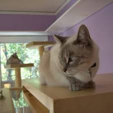 cat in house the best cat house 41 photos 134 reviews pet sitting