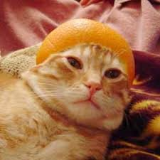 orange cat names scurvy awareness day cats wearing fruit on their heads