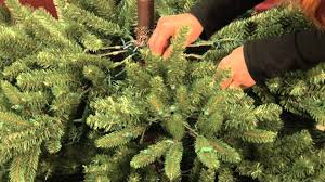 Ge Franklin Fraser Fir Christmas Tree by Shaping Your Pre Lit Tree Youtube