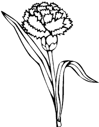 Carnation Flower Picture Colouring Page