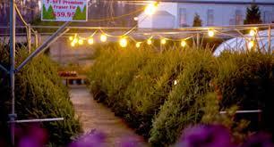 Christmas Tree Saplings For Sale Ireland by Holiday Wreaths U0026 Decor U2013 Homestead Garden Center U2013 757 566 0404