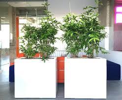plante de bureau plante pour le bureau plantes de bureau plante pour bureau sans