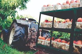 Pumpkin Farms In North Georgia by Produce Store Local Market In North Georgia Jaemor Farms