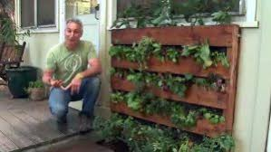 Building And Planting Your Own Pallet Vegetable Garden