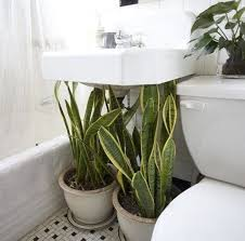 Good Plants For Bathroom by 28 Best Plants For Bathroom The Best Plants For Your