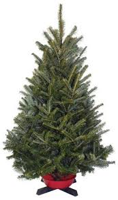 Fraser Fir Christmas Trees Delivered by Cedar Grove Christmas Trees