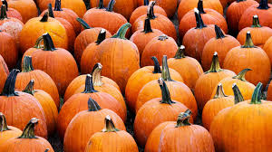 Pumpkin Patch Patterson Ny by Pumpkins Npr