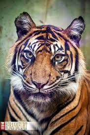 der zoo wildes wohnzimmer frankfurt fotostrecke und