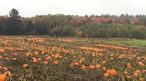 Livermore Pumpkin Patch Farm by Stevenson Strawberry Farm Home Facebook