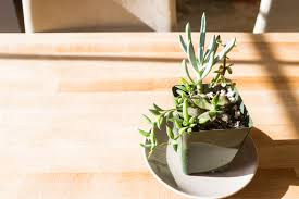 Fake Plants For The Bathroom by How To Avoid Killing Your Succulents 7 Tips