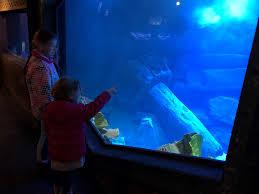 aquarium geant a visiter belgique aquarium amnéville