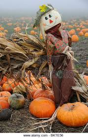 Pumpkin Picking Staten Island 2015 by Scarecrow In Pumpkin Patch Stock Photos U0026 Scarecrow In Pumpkin