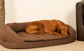 The benefits of a memory foam dog bed Over The Top