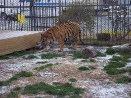 100 Tiger Truck Stop Louisiana This Has Been Imprisoned At A For The Past 15 Years