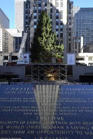 Christmas Tree Rockefeller Center Live Cam by History Of The Rockefeller Center Christmas Tree Ghananation Com