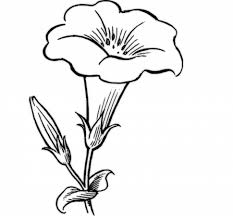 Coloring PagesFlower Simple Drawing Beautiful Art Library Pages Flower