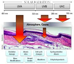 Uvb Tanning Beds by Ijms Free Full Text Uv Radiation And The Skin Html