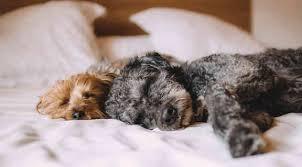 frauen schlafen mit hund im bett besser