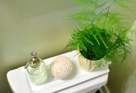 Plants For The Bathroom Feng Shui by Asparagus In The Bathroom Young House Love
