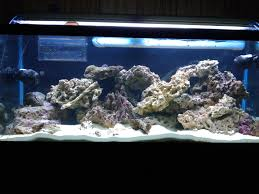 75 Gallon Tank Aquascape Ideas Please. - Reef Central Online Community Home Design Aquascaping Aquarium Designs Aquascape Simple And Effective Guide On Reef Aquascaping News Reef Builders Pin By Dwells Saltwater Tank Pinterest Aquariums Quick Update New Aquascape Of The 120 Youtube Large Custom Living Coral Nyc Live Rock Set Up Idea Fish For How To A Aquarium New 30g Cube General Discussion Nanoreefcom Rockscape Drill Cement Your Gmacreef Minimalist 2reef Forum