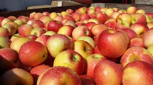 Apple And Pumpkin Picking Maryland by Bakery U0026 Orchard With Fresh Baked Goods U0026 Gift Items Md