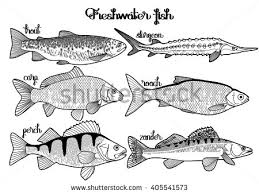 Graphic Fish Collection Drawn In Line Art Style Sturgeon Roach Zander Trout