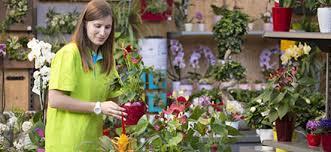 prendre soin de orchidée conseil plantes et orchidées