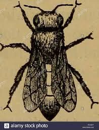 biene kultur oder erfolgreiche leitung der imkerei bienen